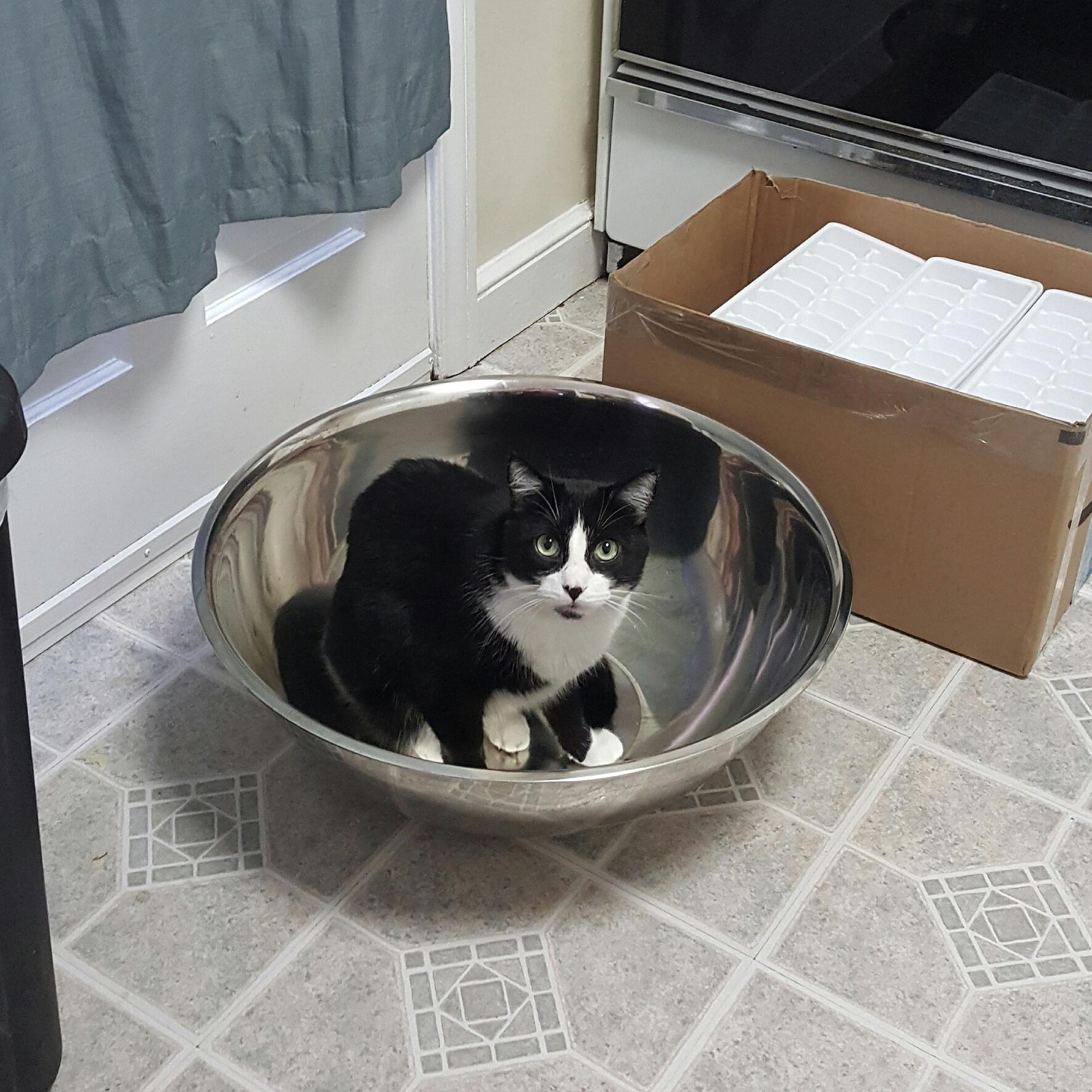 Kitten Raw Food Diet Recipe
