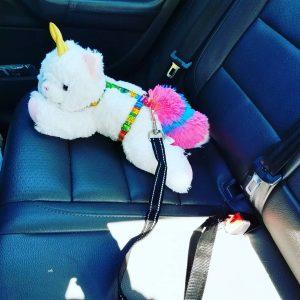Seat Belt Style Dog Collar Nyan Cat